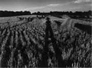 Harvest Spirit